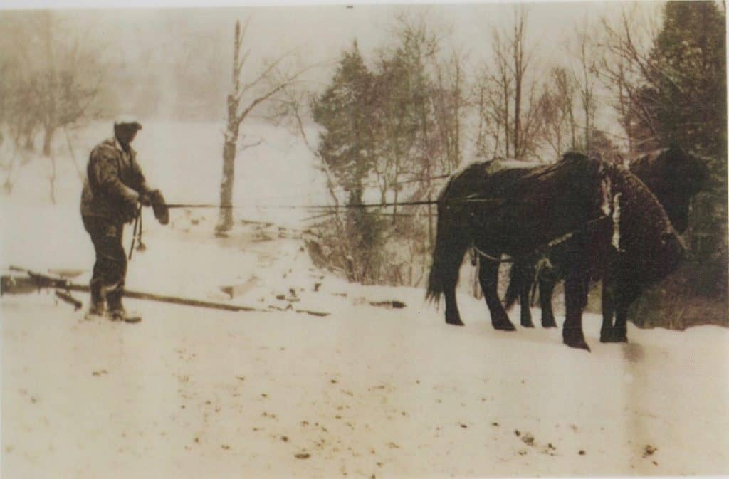Alfred Isaac Spurr with His Belgium Horses